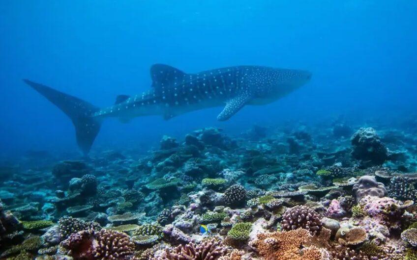 Maldivler'de Kiralık Su Üzeri Villa ID:99 (14)