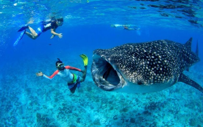 Maldivler'de Kiralık Su Üzeri Villa ID:99 (18)